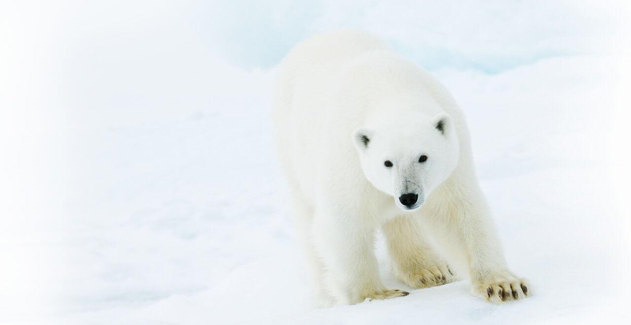 Der synthetica Eisbär. Bärenstark in PTFE und Silikon.